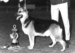 Ch Almark Black Prince, Grand Victor of 1st National Show, 1967