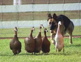 herding_vondoussa_faithnomore