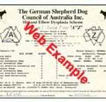 Hip & Elbow Certificate