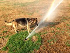 sprinkler heaven !