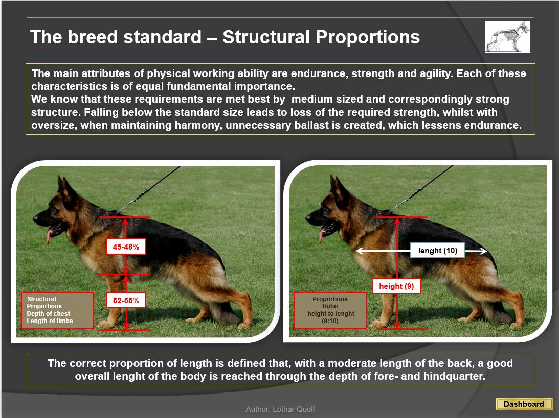 Anatomy of the Dog – German Shepherd Dog Council of Australia