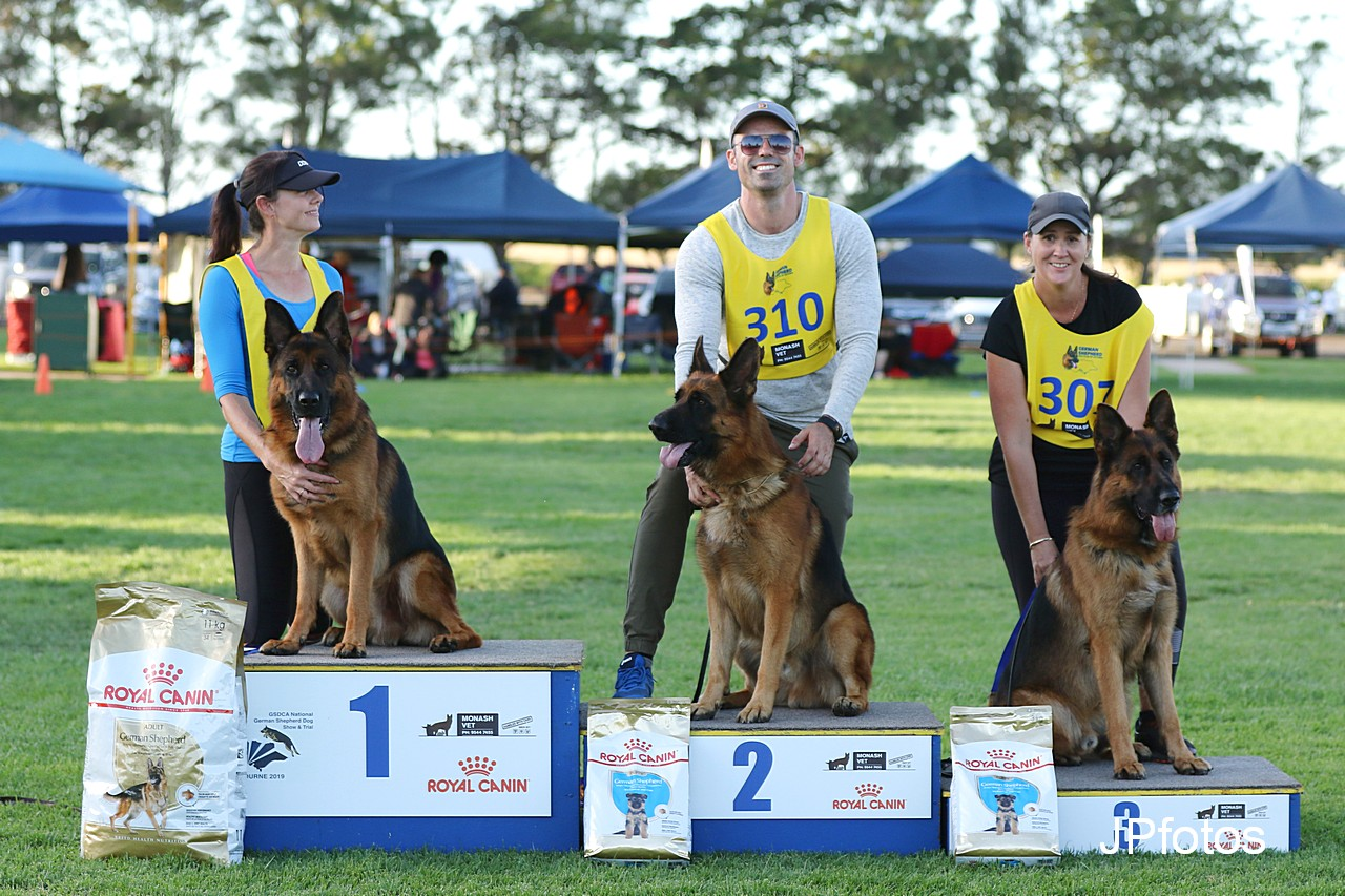 German Shepherd Dog Council of Australia – German Shepherd